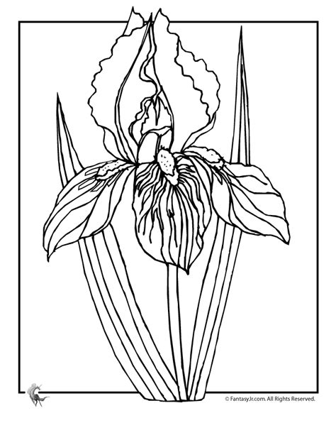 coloring pictures of iris flowers iris flower coloring page woo jr kids activities