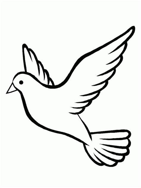 imagenes de palomas blancas grandes aves