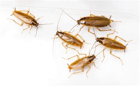 roaches in house dogs first line of defense against 3 most destructive house pests pest control