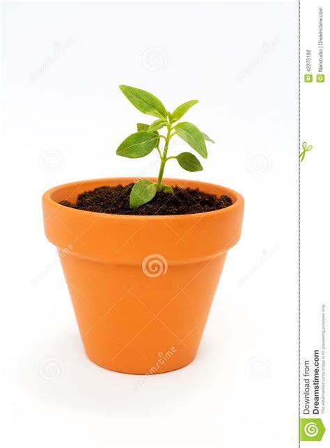 small flower pot a small flower pot and green plant stock photo image