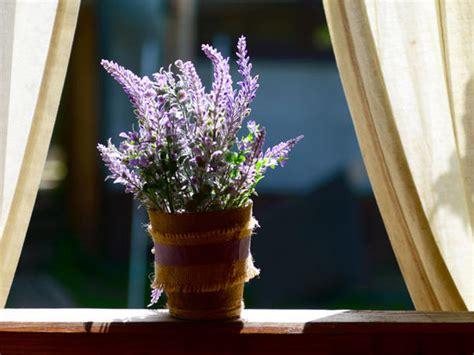 lavendel im schlafzimmer diese pflanzen solltest du im schlafzimmer haben