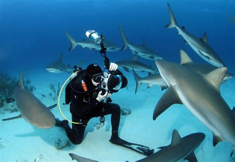 dive shark shark diving stuart cove s