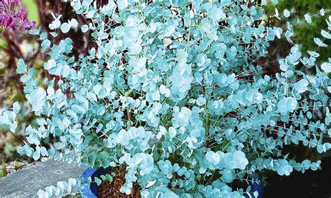 Winterharte Pflanzen Immergr N 1273 by Baldur Garten Deal Des Tages Groupon