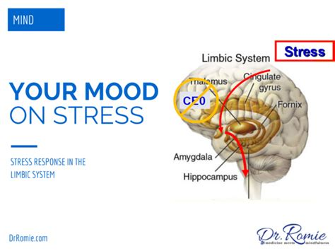 Brain Stress - the stress reponse your brain on stress