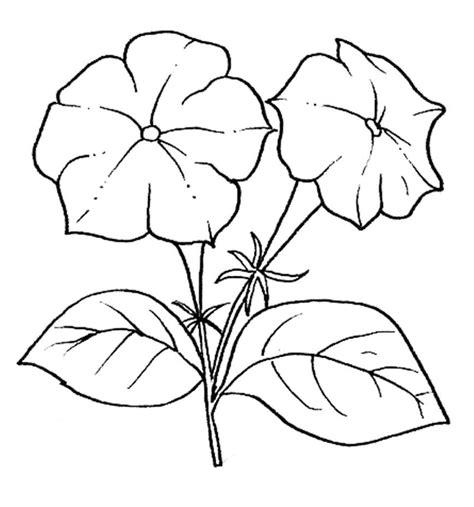 di fiori disegni di fiori da colorare foto 3 40 nanopress donna