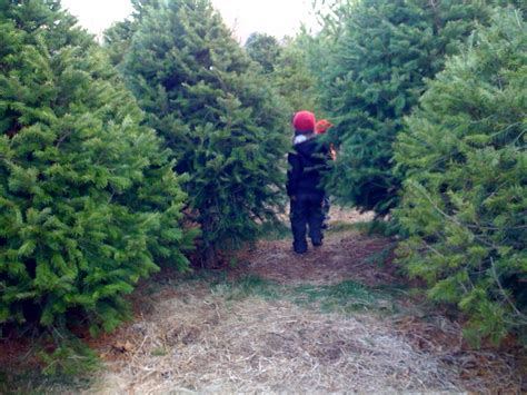 christmas tree hunting in long island ny girl gone travel