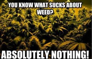 Marijuana Meme - marijuana meme monday 5 20 highroulette com marijuana