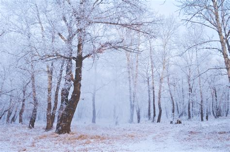 winter images winter forest free stock photo public domain pictures