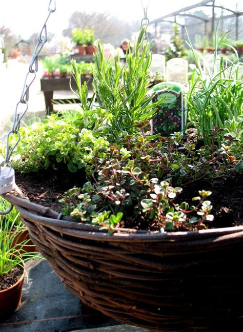 hanging herb garden hanging herb baskets how to make an herb garden in a basket