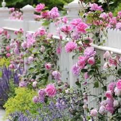 Tanaman Jadi Bunga Mawar Batik Garis Merah pagar tanaman paling jelita kumpulan artikel tips