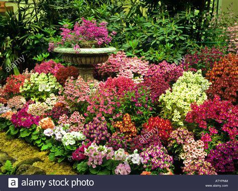 flowers in australian gardens colorful display of flowers in fitzroy gardens