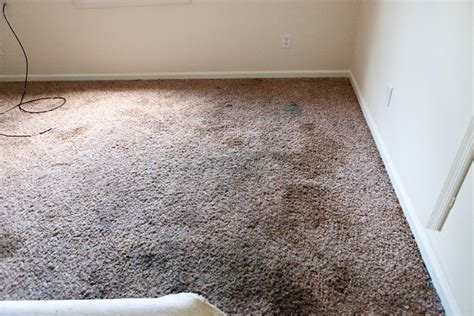 Which Carpet Or Paint - carpet spray paint carpet vidalondon