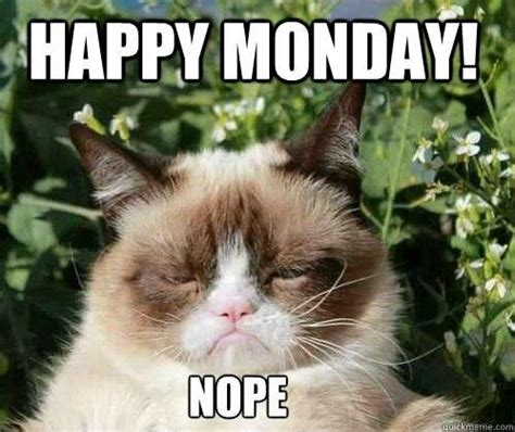 Grumpy Cat Monday Meme - 11 cats who need some monday motivation funky pigeon