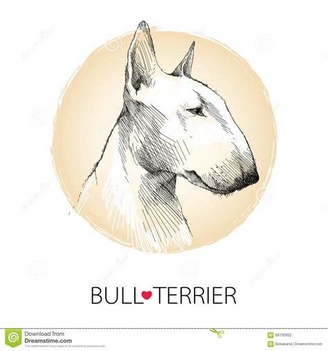 testa in inglese vector lo schizzo profilo della testa di di bull