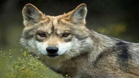 imagenes de animales de mexico dia mundial de los aniamles hay 457 especies en peligro de