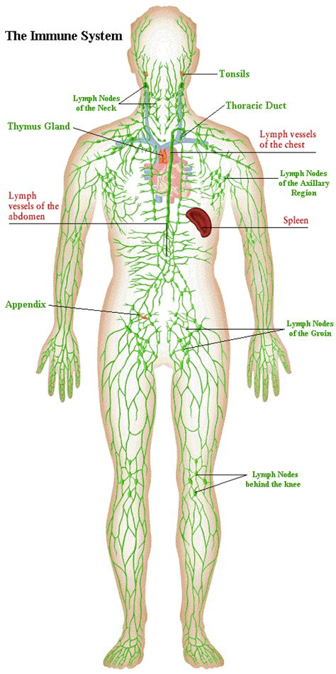 Can Ionic Foot Detox Shrink Lymph Nodes by Family Wellness Center Pllc Chiropractor In
