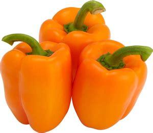 1 Biji Benih Buah Ciplukan Jumbo Kuning Import jual benih paprika orange kuning import green choice