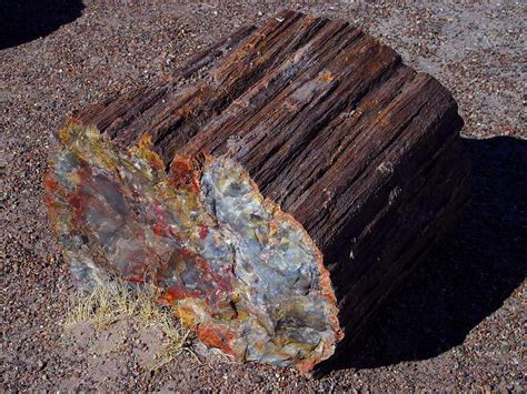 petrified wood geol 102 fossils and fossilization