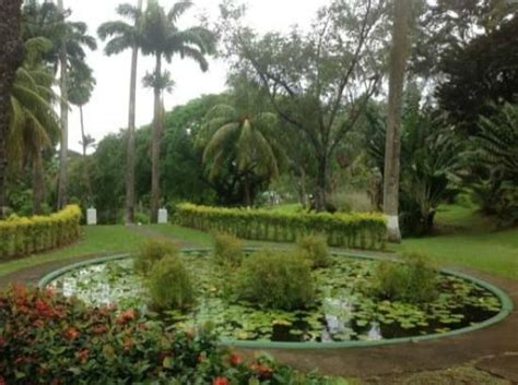 St Vincent Botanical Gardens 1000 Images About My Home Country On Pinterest Grenadines Carnival 2015 And Islands