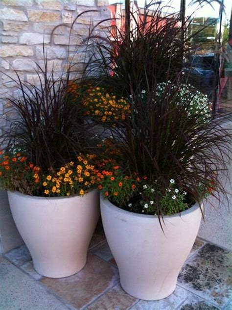 Ornamental Grasses For Planters by 25 Best Ideas About Fall Flower Pots On Fall