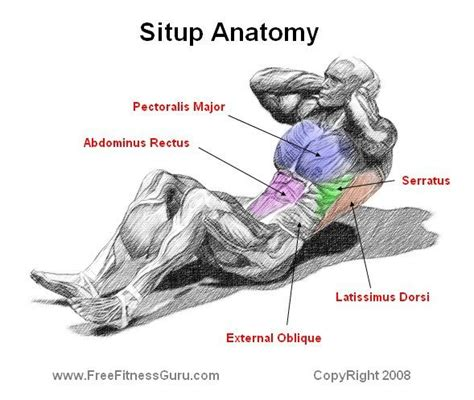 situp anatomy mens fitness health exercise