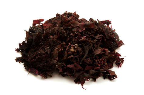 Atlantic Dulse Detox Brain by 6 Potent Superfoods To Detox Heavy Metals From Your