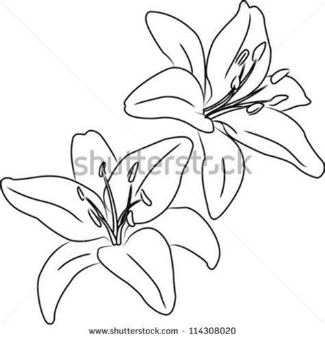 Outline Sketches Of Flowers by 25 Great Ideas About Flower Outline On Simple Lotus Flower Water But And