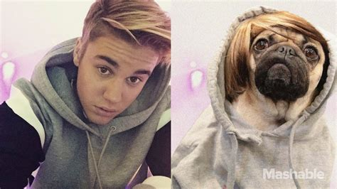 wow what does pug doug the pug the real pup is acting like justin bieber for one day urdogs