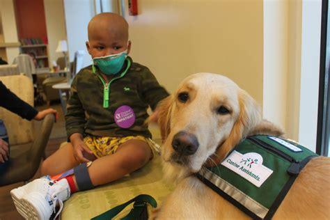 nathaniel comfort dog quot employees quot cheer up children s patients wvxu