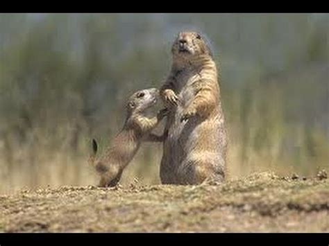 little house on the prairie dog breed little dogs on the prairie