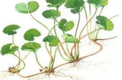 perkembangbiakan  tumbuhan rangkuman pengetahuan