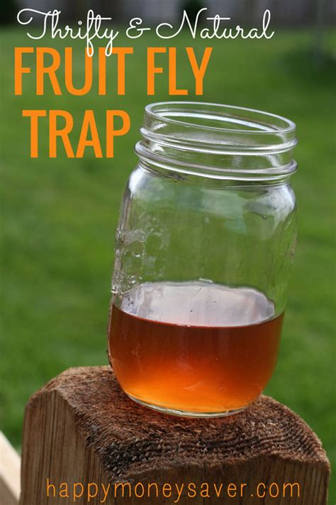 How To Catch Flies In House by The Best Fruit Fly Trap Using Vinegar And Dish Soap They Must Die