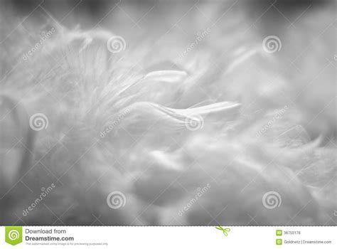 preteen girl with white feathers stock image image of white feathers stock photo image of drawing fluffy