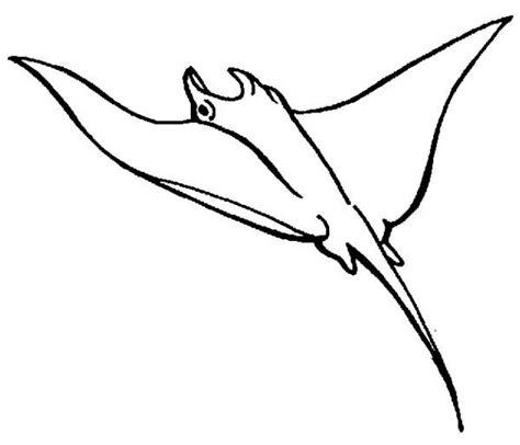 manta ray coloring sheet coloring pages ideas