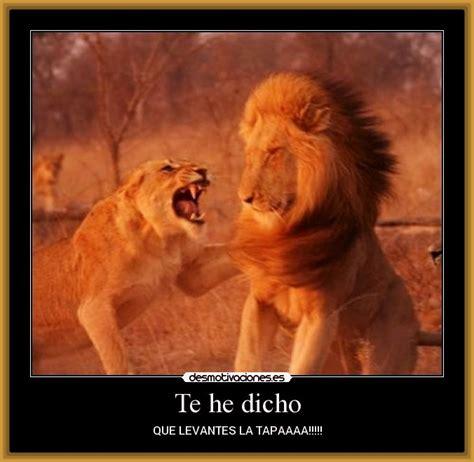 imagenes leones dibujos fotos y dibujos de leones archivos imagenes de leones