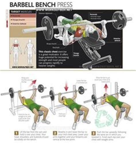 bench press proper technique 1000 images about chest excersises on pinterest chest