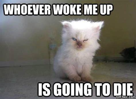 Saturday Morning Memes - funny saturday morning memes