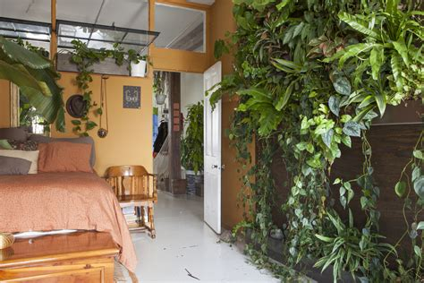plants for apartments meet a woman who keeps 500 plants in her brooklyn