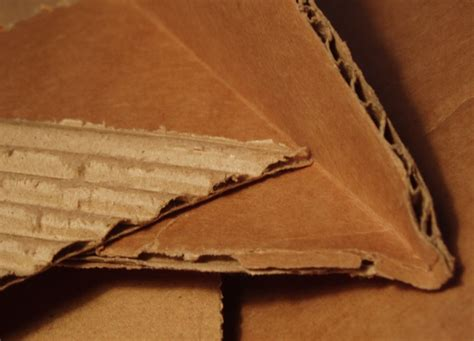 termites of the state why complexity leads to inequality books do termites eat cardboard boxes what about cockroaches