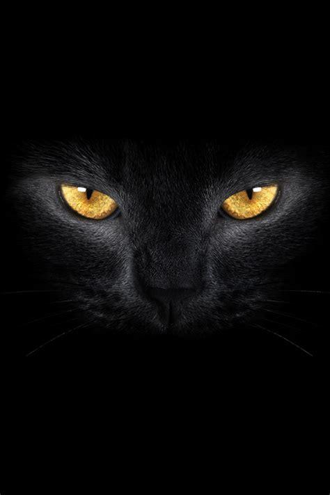 black cat wallpaper iphone terralonginqua black cat eyes hq photography wallpaper