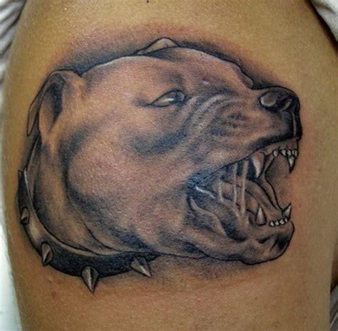 tattoo pitbull pictures pitbull and ajilbabcom portal