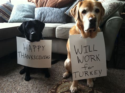 can you give dogs turkey 11 thanksgiving staples that are hazardous to pups barkpost