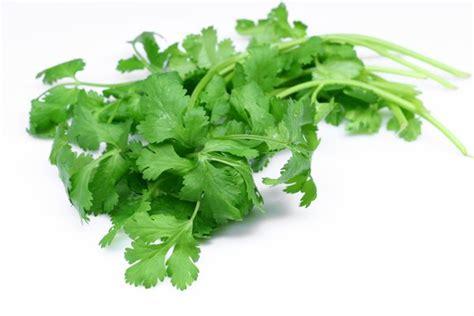 Detoxing With Cilantro by Cilantro Nature S Detox Sourced Conscious Cuisine