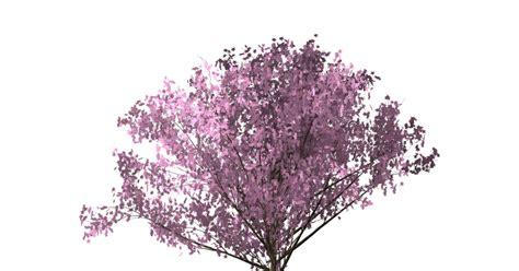 latar belakang membuat vas bunga download gambar pohon sakura png grafis media