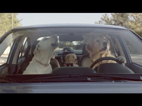 golden retriever driving car commercial subaru tested subaru commercial what s the fuss