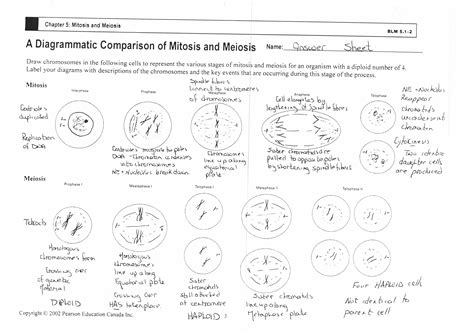 Mitosis Vs Meiosis Worksheet by Mr Watts Website