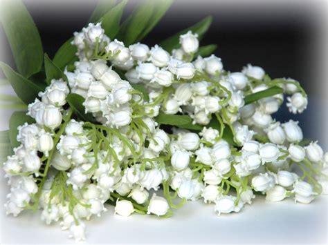 fiori mughetti nodi chiacchierino il mughetto nel vasetto