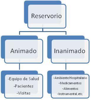 cadena epidemiologica fiebre tifoidea cadena de transmisi 243 n de infecciones semiolog 237 a y