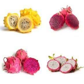 Bijibenihbibit Buah Naga Mix 1 jual benih bibit buah naga murah lengkap bibit