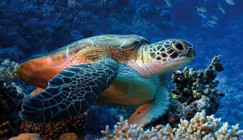 tartarughe marine alimentazione ogni anno muoiono 100mila esemplari di tartarughe marine